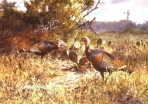 John Cowan - 1988 Texas Wild Turkey Stamp and Print
