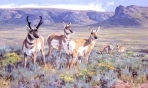 Ken Carlson - HIGH PLAINS PRONGHORN