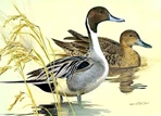 Texas Duck Stamp Prints - 1982 Pintails by Ken Carlson