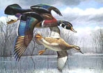 Texas Stamp Prints - 1984 Wood Ducks by David Maass
