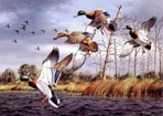 Texas Duck Stamp Prints - 1989 Mallards by David Maass