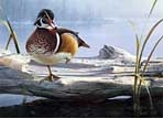 Texas Duck Stamp Prints - 1991 Wood Duck by Dan Smith