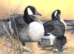 Texas Duck Stamp Prints - 1992 Canada Geese by Larry Hayden