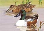 Texas Stamp Prints - 1994 Shovelers by Ken Carlson