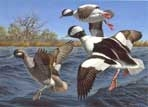 Texas Stamp Prints - 1995 Buffleheads by David Maass