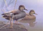 Texas Duck Stamp Prints - 1996 Gadwalls by Daniel Smith