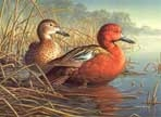Texas Duck Stamp Prints - 1997 Cinnamon Teal by Jim Hautman