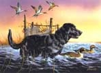 Texas Duck Stamp Prints - 1998 Pintails/Black Labrador by Phillip Crowe