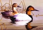 Texas Duck Stamp Prints - 1999 Canvasback by Robert Hautman
