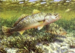 Texas Saltwater Stamp Prints - 2003 Speckled Trout By Mark Susinno
