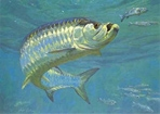 Texas Freshwater Fish Stamp Prints - 1992 Tarpon by Mike Stidham