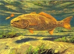 Texas Stamp Prints - 1999 Redfish by Mike Stidham