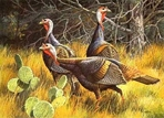 Texas Turkey Stamp Prints - 1986 Texas Turkey By David Maass
