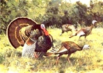 Texas Turkey Stamp Prints - 1987 Texas Turkey By Ken Carlson