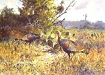 Texas Turkey Stamp Prints - 1988 Texas Turkey By John Cowan